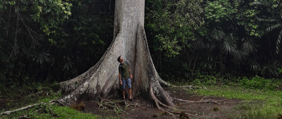 A Ceiba tree - towering into the sky